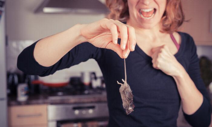छिपकली हो या मक्खी-मच्छर, ये घरेलु उपाय दौड़ा-दौड़ाकर घर से बाहर खदेड़ेगा बिन बुलाएं मेहमानों को ( effective home remedies to rid cockroaches rat lizards ants mosquitoes in hindi )