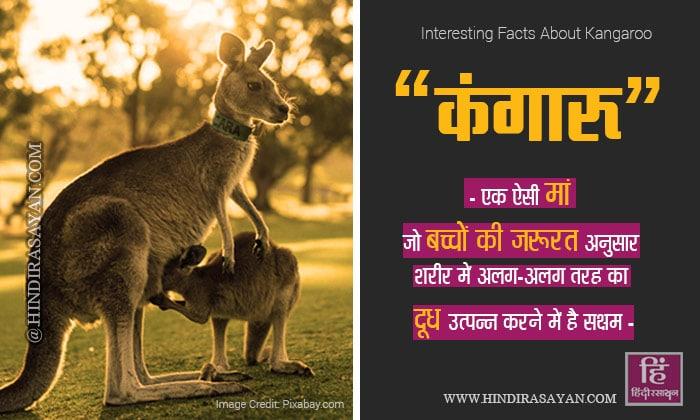 Interesting Facts Information About Kangaroos in Hindi कंगारू के बारे में रोचक जानकारी